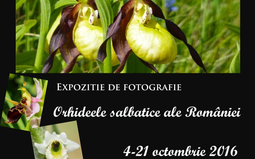 Orhideele sălbatice ale României la Grădina Botanică