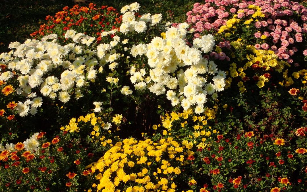 """,,Culorile Toamnei"""" la Grădina Botanică ,,Dimitrie Brândză"""" a Universităţii din Bucureşti"""