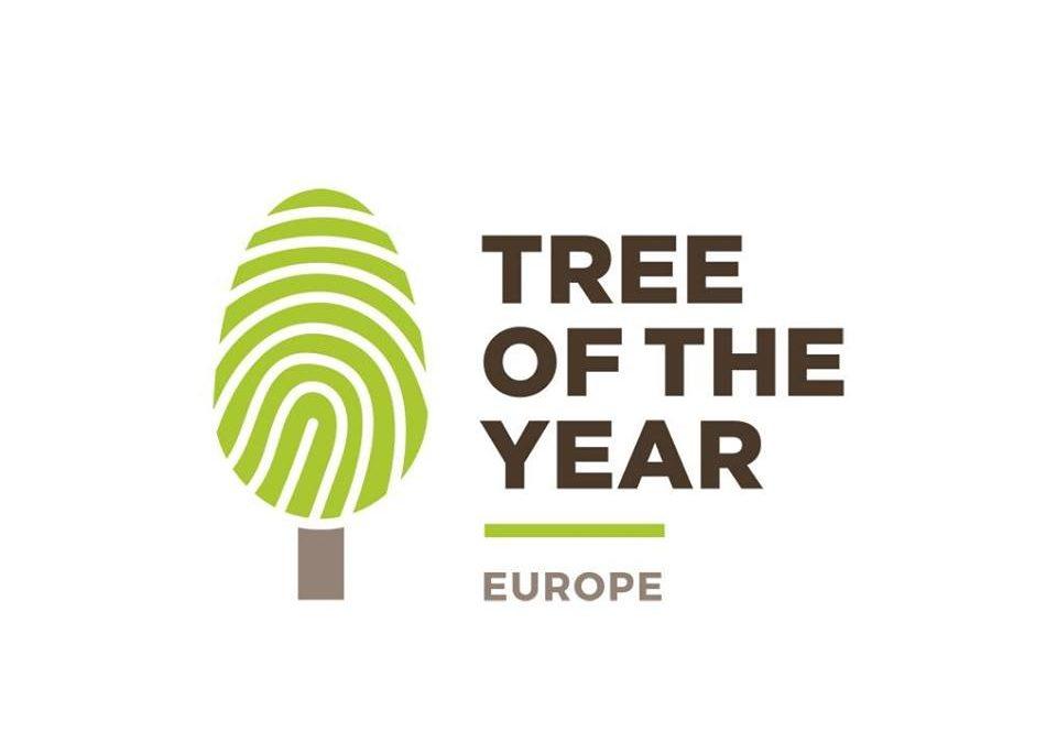 """Facultatea de Geografie a Universității din București înscrie România în competiția """"Arborele European al Anului"""" (Tree of the Year) 2018"""
